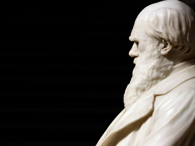 Statue of Charles Darwin at the Natural History Museum in London.