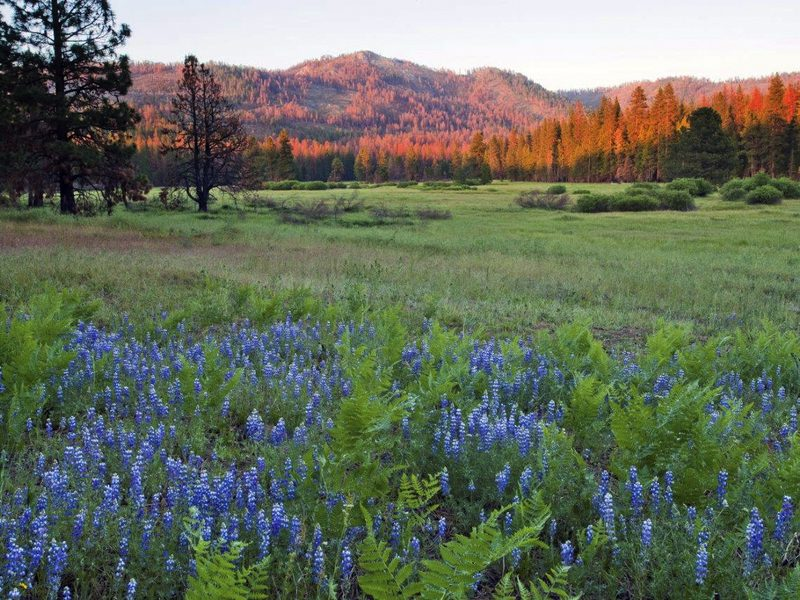 A photo provided by The Trust for Public Land shows Ackerson Meadow in Yosemite National Park, Calif. Visitors to the park now have more room to explore nature with Wednesday's announcement that the park's western boundary has expanded to include Ackerson Meadow, 400 acres of tree-covered Sierra Nevada foothills, grassland and a creek that flows into the Tuolumne River.