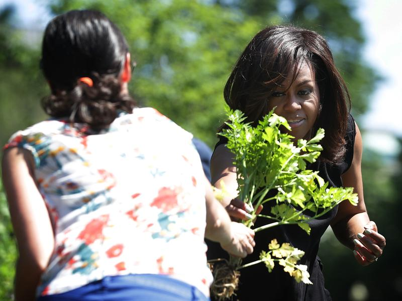 First lady Michelle Obama participates in a White House Kitchen Garden harvest in June.