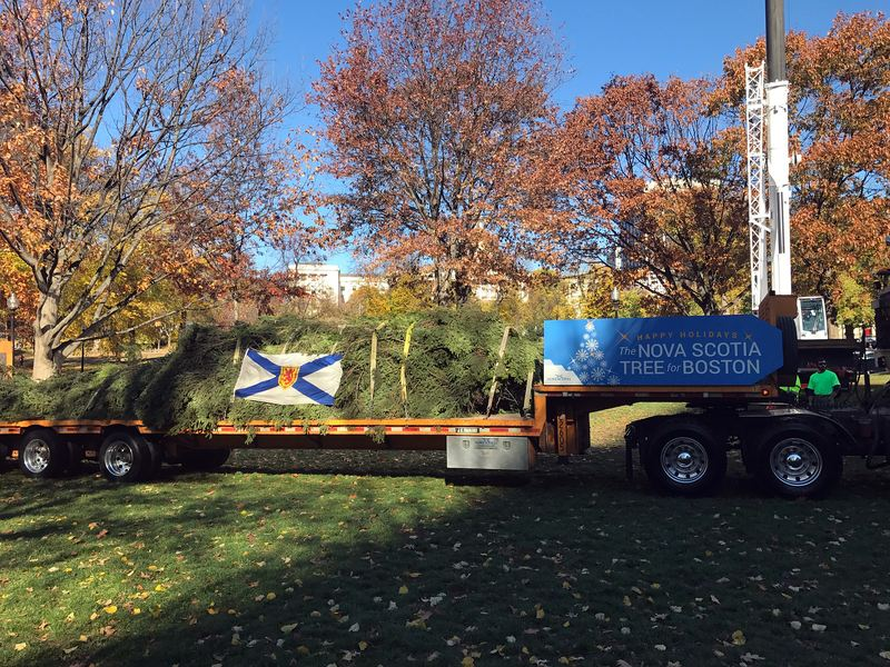 Boston's official Christmas tree, a 47-foot white spruce from the Cape Breton Island, Nova Scotia, arrives at Boston Common on Nov. 18.