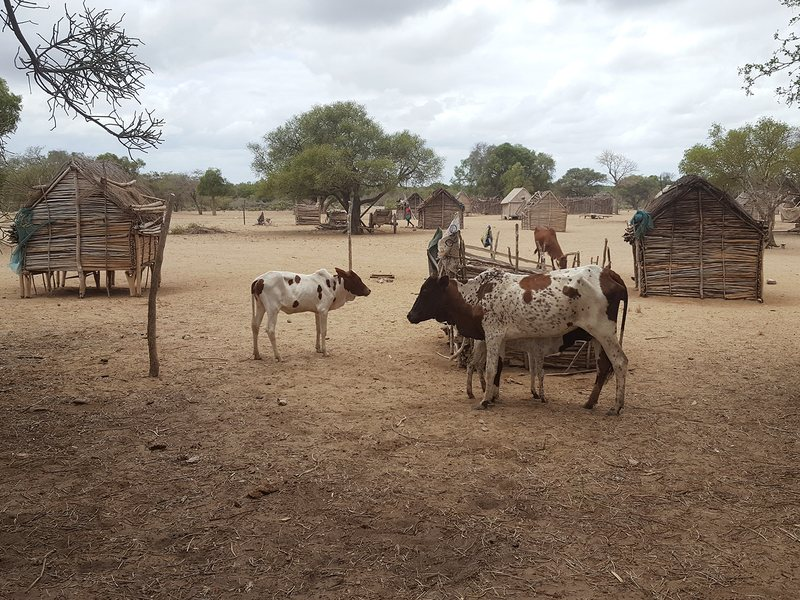 A hamlet between the towns of Tsihombe and Ambovombe, in the most drought-stricken area in southern Madagascar. Most families in the region have resorted to eating wild fruits and tree leaves.