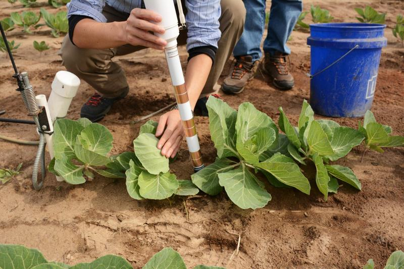 Researchers install a networked soil moisture sensor at the University of Georgia's Stripling Irrigation Research Park in Camilla, Ga. (Sam Whitehead/GPB)