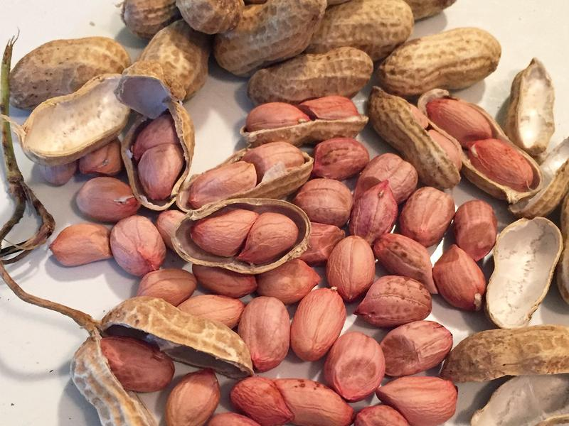 African runner peanuts were once a defining flavor of the South, memorialized in songs, peanut fritters, peanut soup and in Charleston's signature candy, the peanut-and-molasses groundnut cake. But by the 1930s the nuts had all but disappeared.
