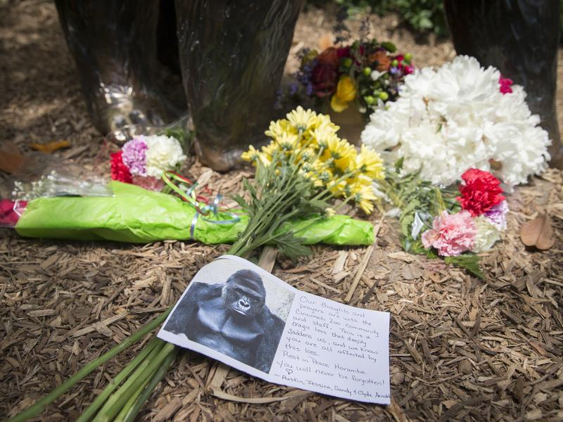 Flowers and sympathy cards for Harambe the gorilla at the Cincinatti Zoo. This year was one for celebrity deaths, human and animal alike.