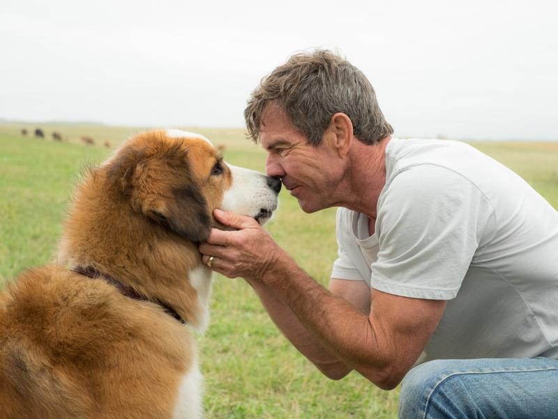 Dennis Quaid (right) reunites with an old pal in <em>A Dog's Purpose</em>.