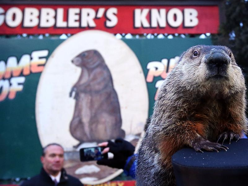 In Bill Murray's <em>Groundhog Day</em>, Punxsutawney Phil checks for his shadow every day on repeat.