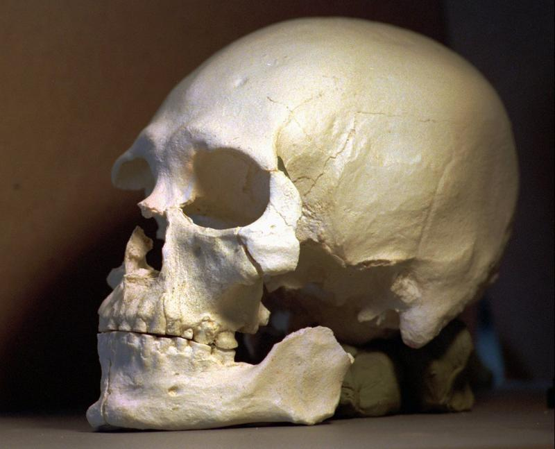 In this July 24, 1997 file photo, a plastic casting of the skull from the bones known as Kennewick Man, is seen in Richland, Wash. (Elaine Thompson/AP)