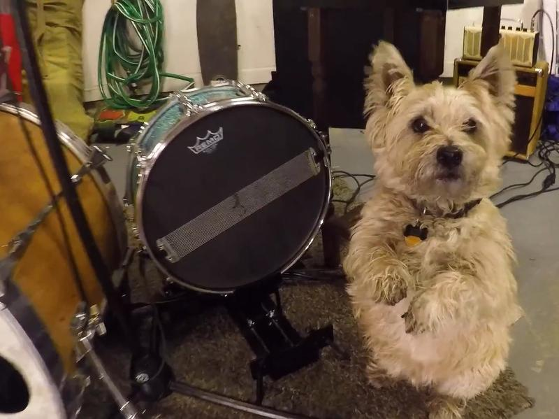 """The pup from Chris Diller's Tiny Desk Contest submission, """"From Now On,"""" gives a standing ovation."""