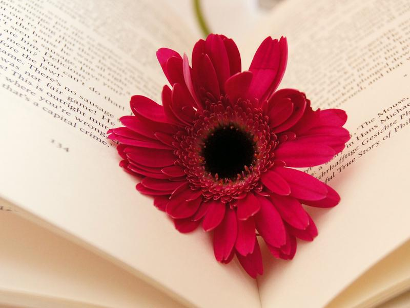 Yes, it <em>is</em> Valentine's Day — but we like romance novels all year 'round.