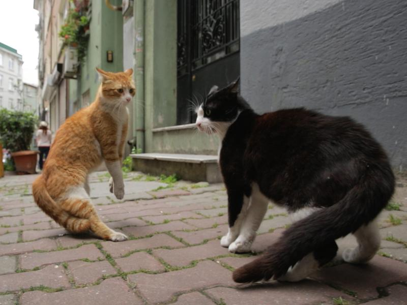 The documentary <em>Kedi</em> gives a cat's-eye view of the back alleys, boho enclaves and rat-infested piers of Istanbul.