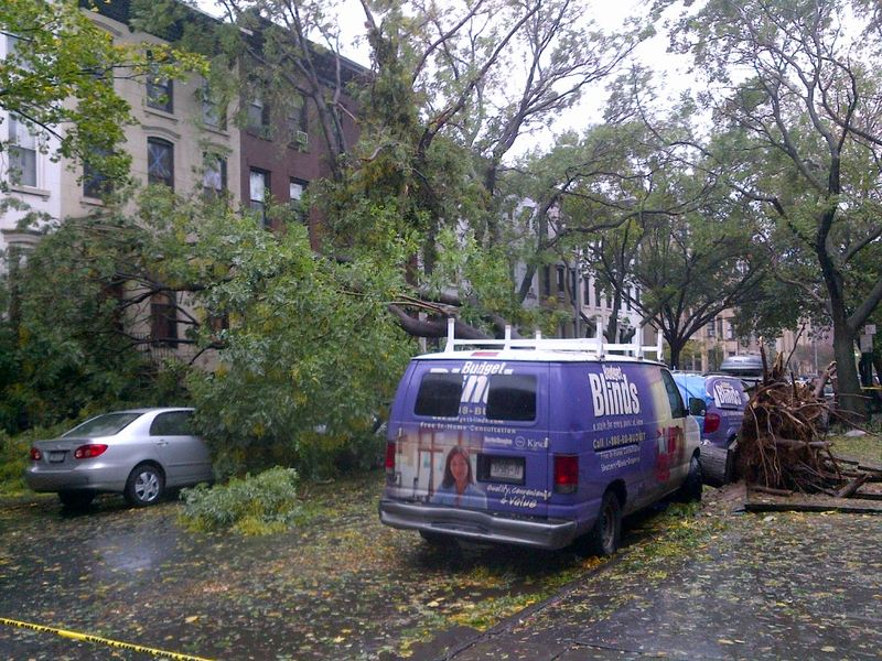 Tree down on Garfield Place in Park Slope.