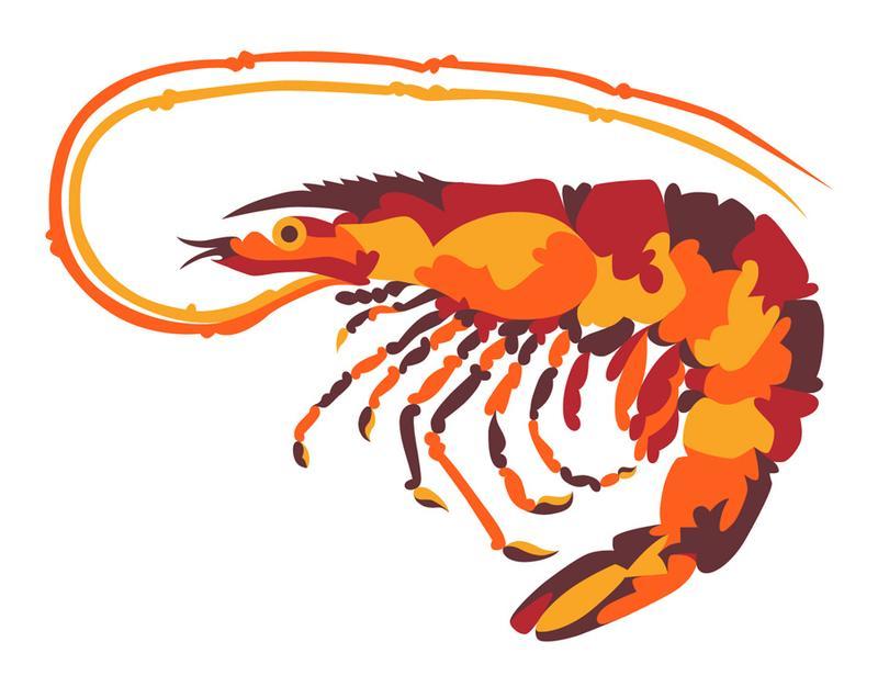 Louisiana shrimp