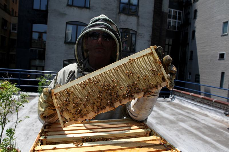 Bee keeper Andrew Cote holding up a frame at the York Prep School roof on the Upper West Side.