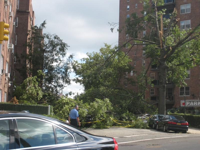 Several toppled trees block a sidestreet off Queens Boulevard in Forest Hills, Queens, after a powerful storm on September 16.