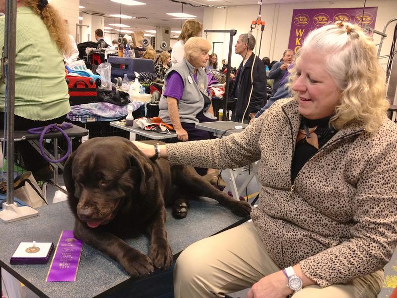 Victory Lab: Walter and owner-handler Sue Willumsen backstage at the 2012 Westminster Kennel Club Dog Show