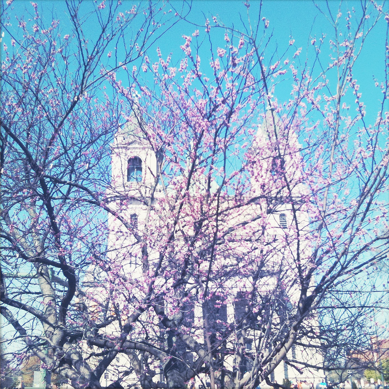 Cathedral In Spring