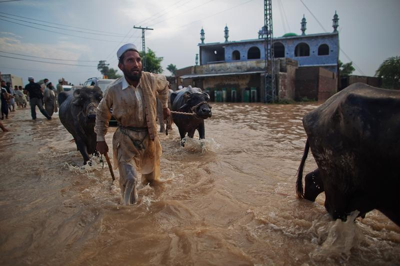 A man leads his water buffalo through a flooded street in Nowshera, Pakistan.
