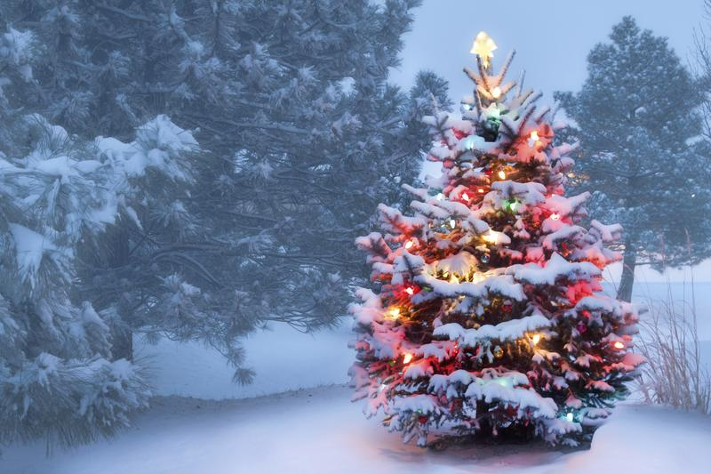 a snowy christmas tree - How Much Are Christmas Trees