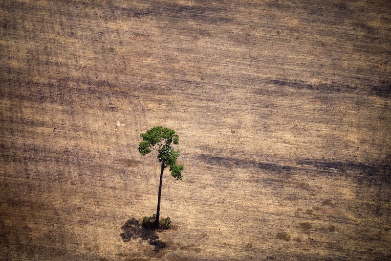 View of a tree in a deforested area in the middle of the Amazon jungle during an overflight by Greenpeace activists over areas of illegal exploitation of timber. October 14, 2014