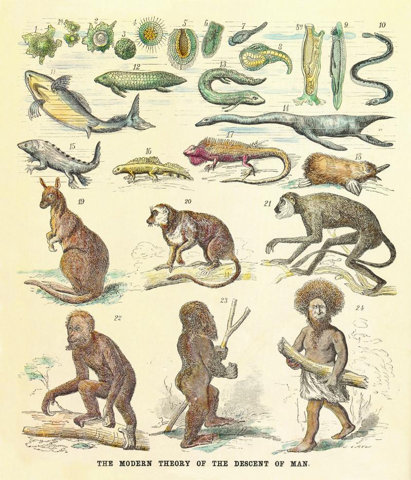 The modern theory of the descent of man, by Ernst Haeckel, published in Anthropogenie oder Entwicklungsgeschichte des Menschen (The Evolution of Man),1874.