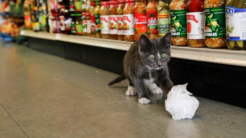 A New York bodega cat ponders its next kill
