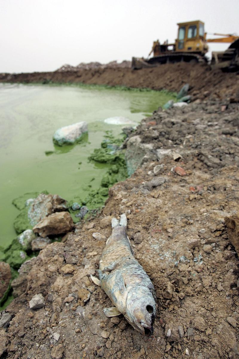 Nitrogen from septic tanks is causing algae blooms, fish die-offs and other adverse effects in coastal waters off of Long Island.