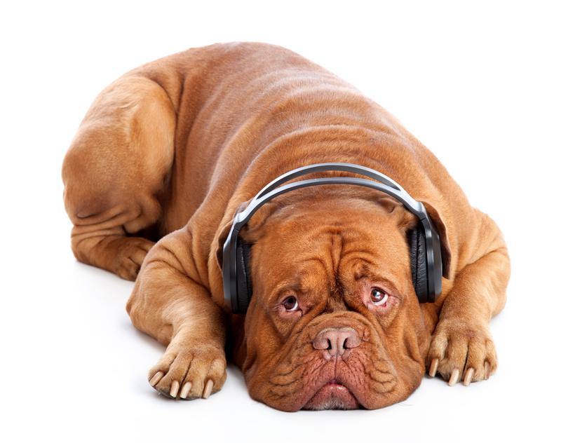 The saddest dog in the world, likely listening to the wrong music.