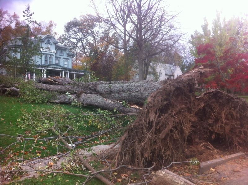Tree down as the result of Hurricane Sandy in Ridgewood, NJ.