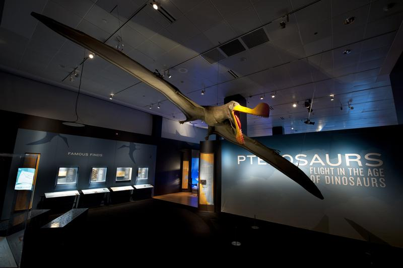 The Quetzalcoatlus had a 33-foot wingspan, making it the largest Pterosaur.