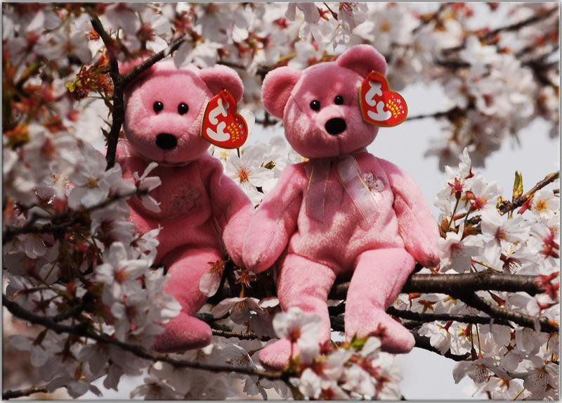 Two Beanie Babies in a cherry tree in Ueno Park, Japan