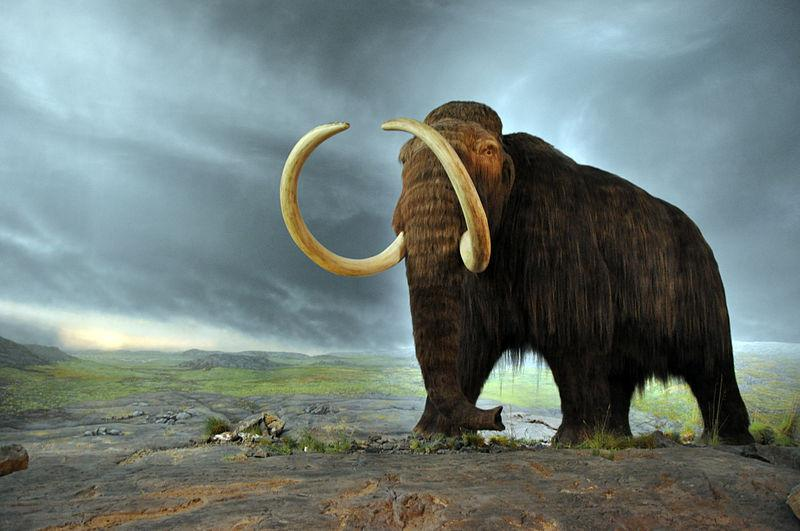 Woolly Mammoth model in the Royal BC Museum in Victoria (Canada).