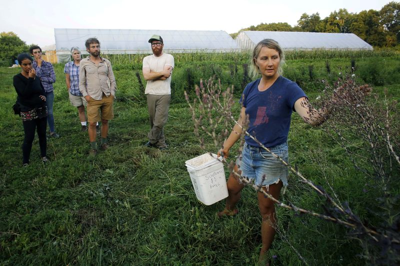 In this Tuesday, Aug. 5, 2014 photo, farmer Katie Miller, 32, of Providence, R.I., right, talks to a group of farmers about harvesting seeds from red leaf lettuce plants at Scratch Farm in R.I.