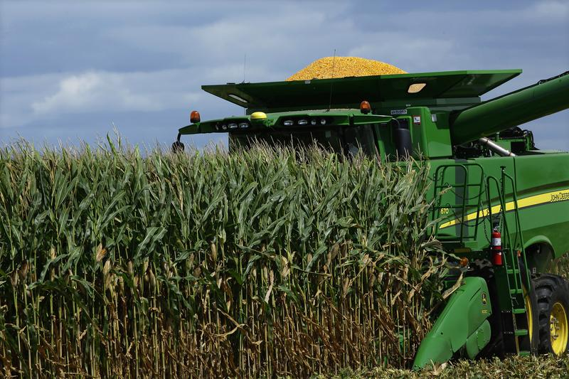 In this Monday, Sept. 1, 2014 photo, a central Illinois corn farmer begins to harvest this years crops of corn in Pleasant Plains, Ill.