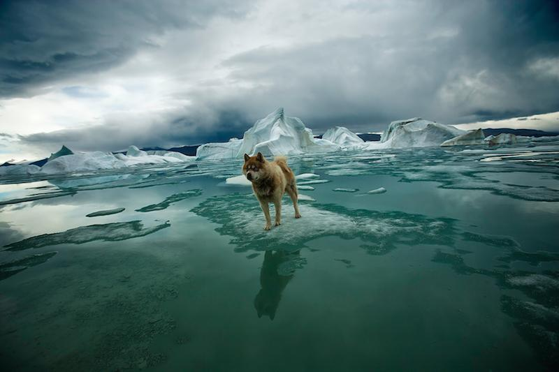 A dog may not be the best defense against bears, but they provide early warning.  Ellesmere Island, 2008