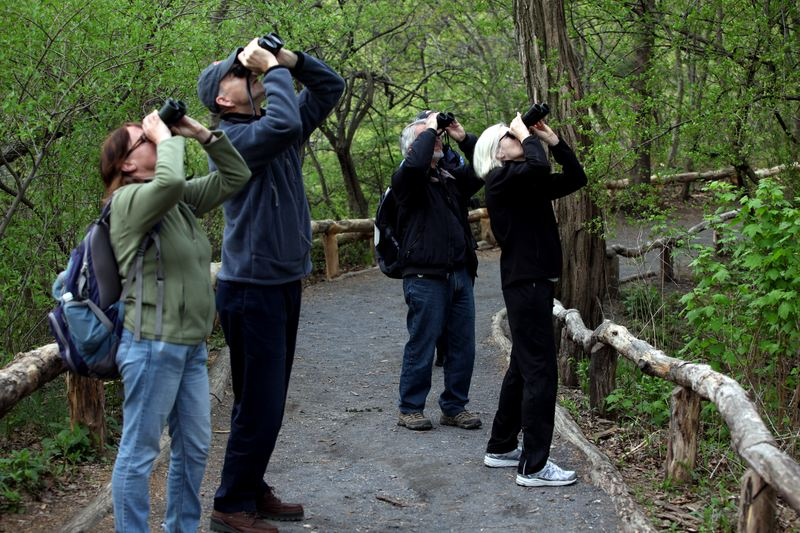 Bird watchers in Central Park checking out peak migration in May 2014.