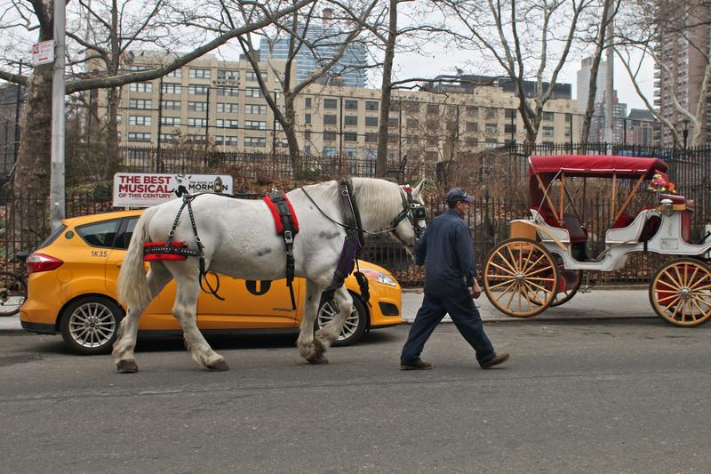 A horse is lead down a city street to a waiting carriage near the West Side Stables in New York City.