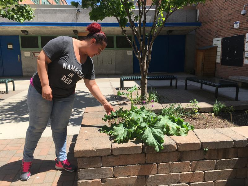 Laura Lugo examines the school garden at Central Park East I. She said that the school year has been full hostility and has decided to enroll her son at another school in the neighborhood.