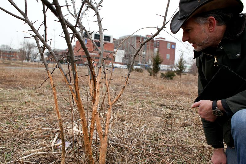 Rich Hallett with the U.S. Forest Service examining trees damaged by rats in Kissena Corridor Park, Queens in April 2014.