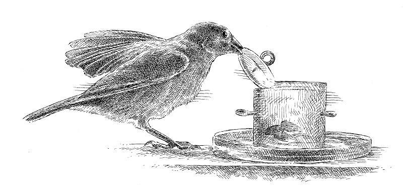 "Illustration of a bullfinch from ""The Genius of Birds,"" by Jennifer Ackerman."