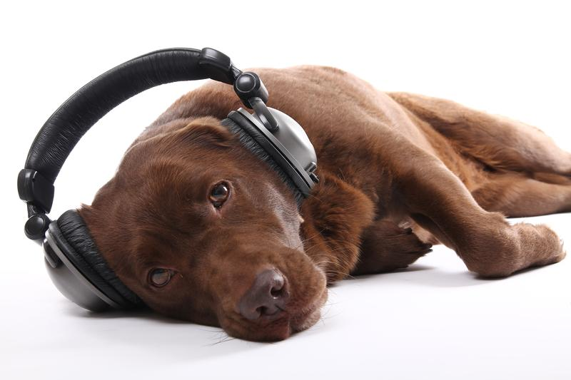 Is this dog listening to Brian Eno or Iron And Wine to relax?