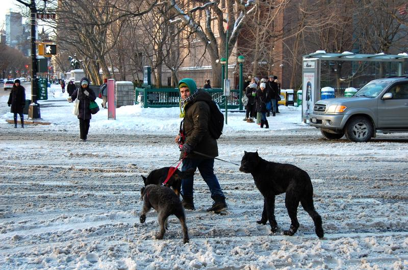 Dogs and people navigating the snow on West 81st Street and Central Park West