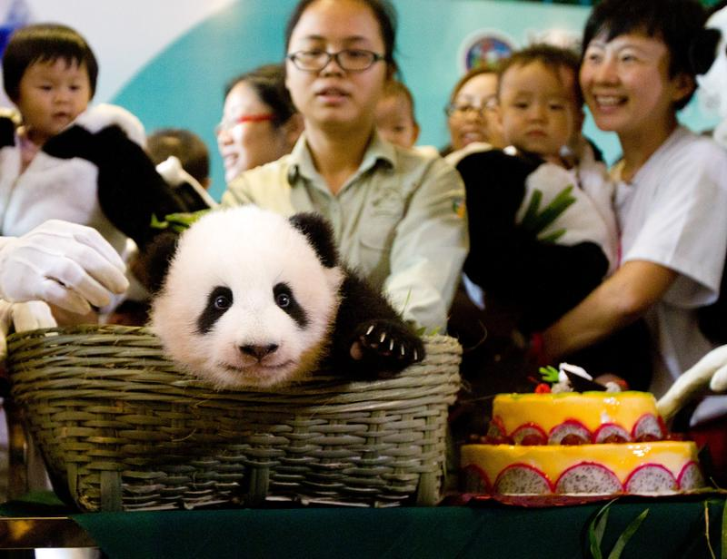 People celebrate a panda's 100-day birth celebration at Chimelong Safari Park on November 7, 2013 in Guangzhou, China.