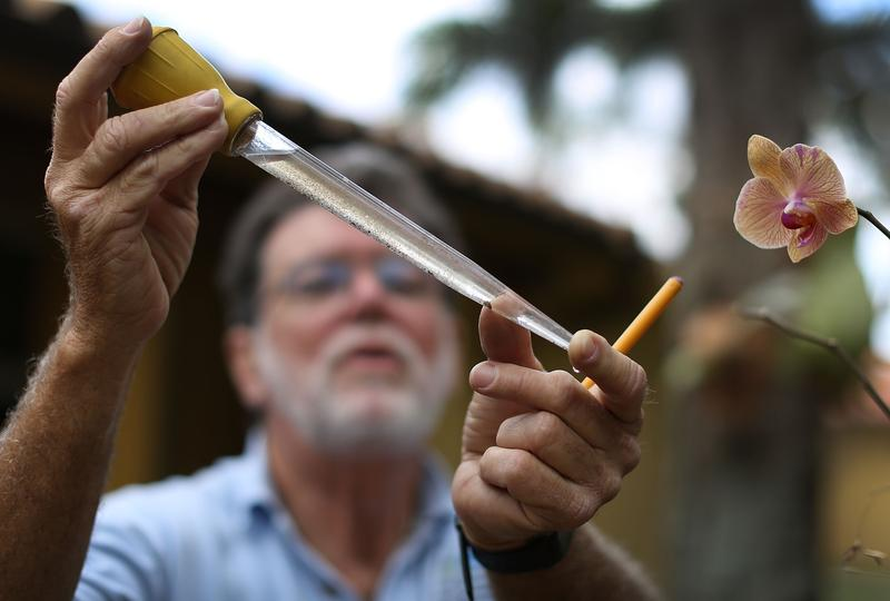 A Miami-Dade county mosquito control inspector looks at mosquito larva in a sample of water.