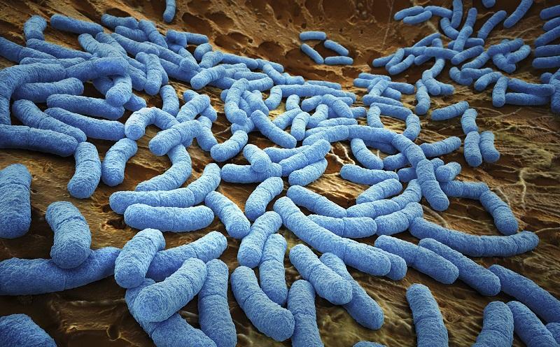 An image of E.coli bacteria.