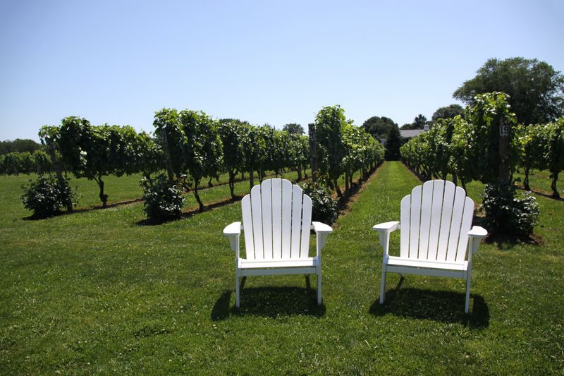 Peconic Winery Vineyards. Cutchogue, Long Island, NY