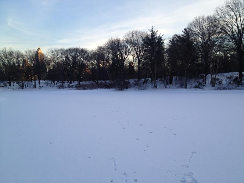 Central Park's Turtle Pond in the snow