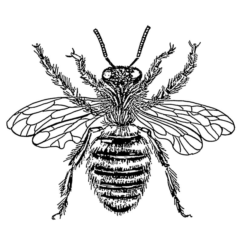 A queen bee.