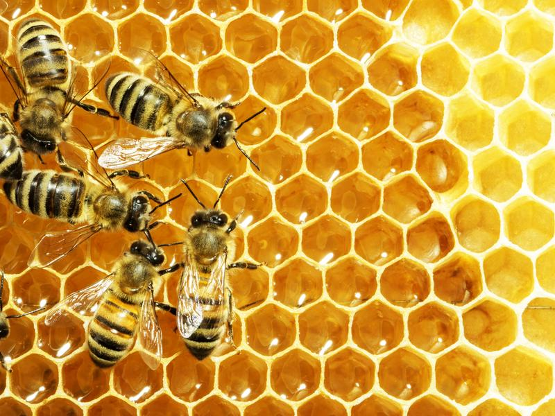 "Retro Report explores the mystery of ""Colony Collapse Disorder,"" which pushed honeybees into the public eye."