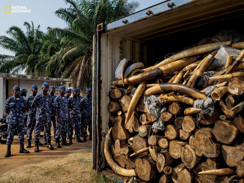 In January 2014, while x-raying a Vietnam-bound container declared to hold cashews, Togolese port authorities saw something strange: ivory. Eventually, more than four tons was found.