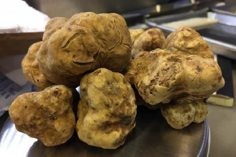 The Sporkful's Dan Pashman goes inside the blackmarket truffle industry.